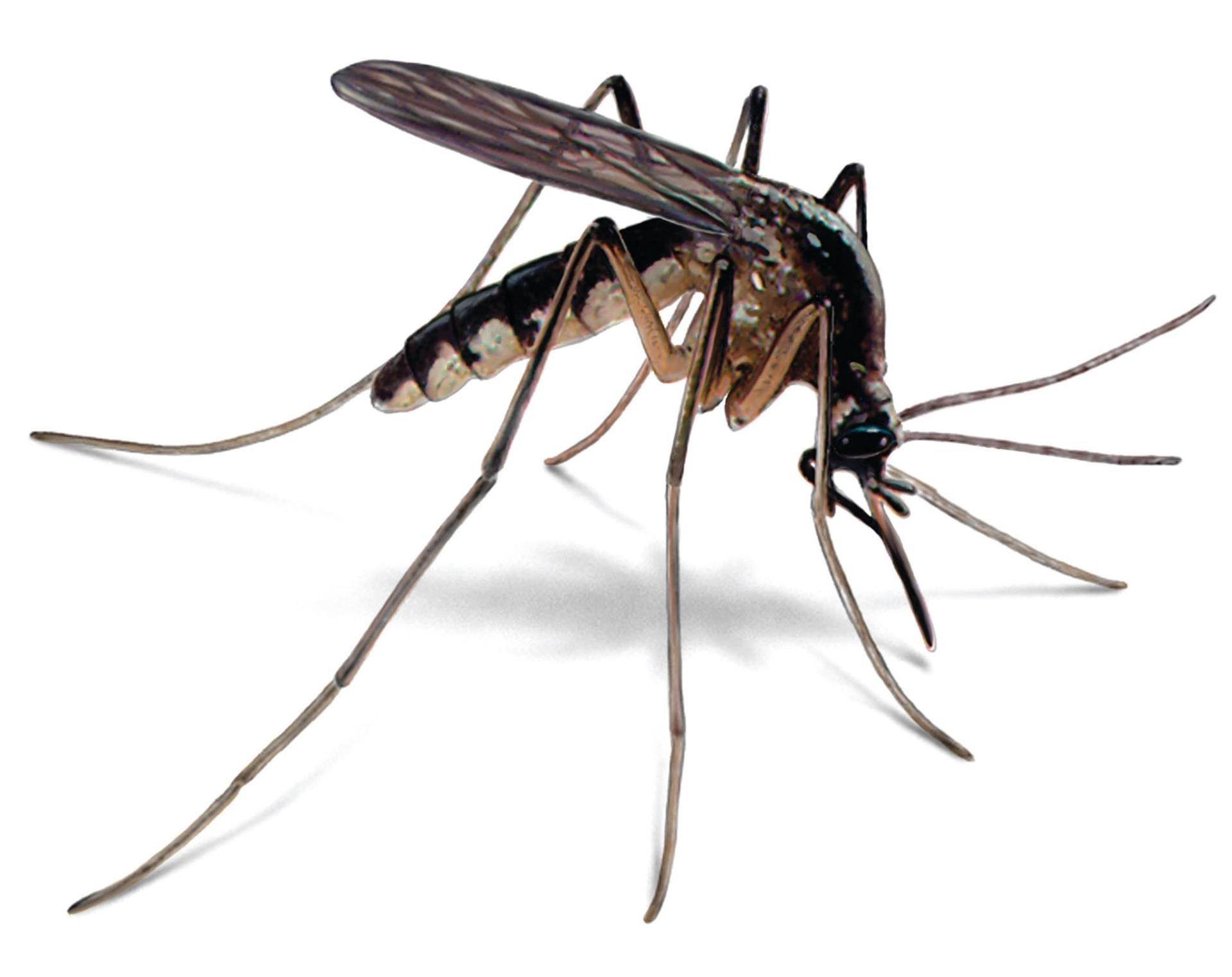 West Nile Virus Found in Mosquitoes