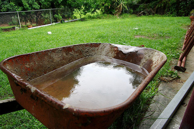 mosquitoes_standing_water_Stagnant_Wheelbarrow