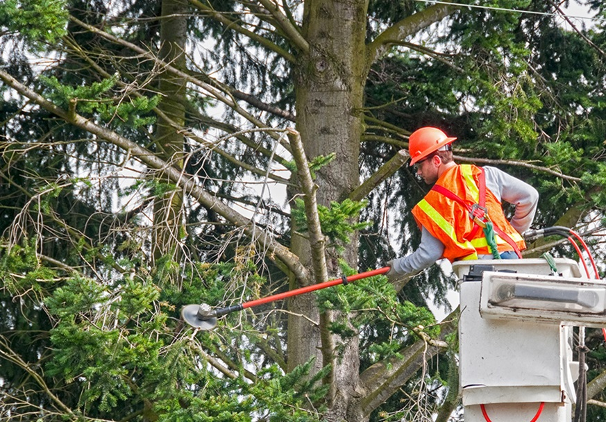 Parkway Tree Trimming